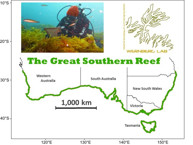 The Great Southern Reef