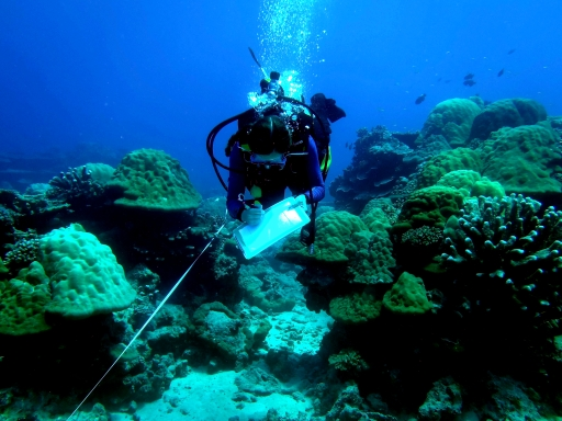 Emily with dreadful corals
