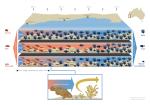 Kelp-Loss-infographic