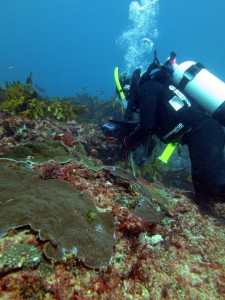 Chenae sampling corals