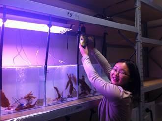 Xiao Xi aquaria