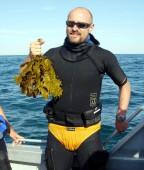 E. radiata, Batemans Bay, Australia