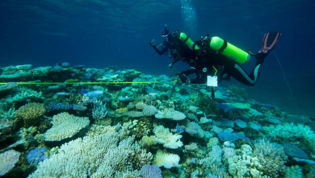 molly-coral-sampling