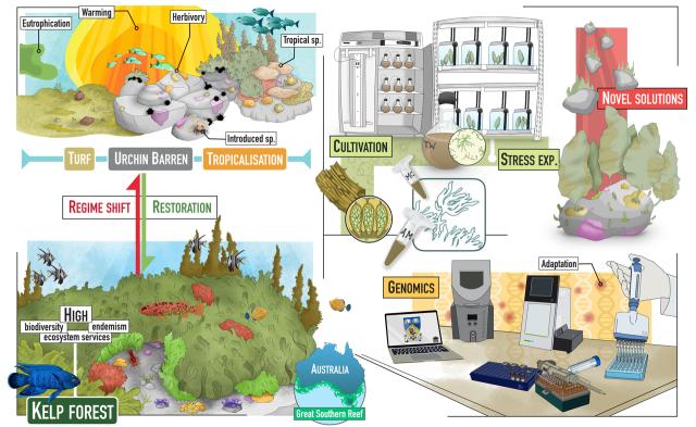 Antoine PhD infographic