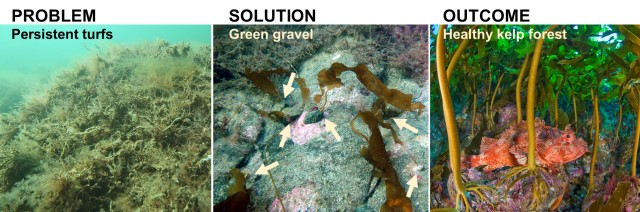 Restoring Blue Forests with Green Gravel