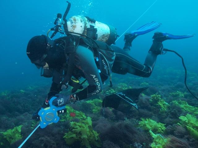 Mason diving